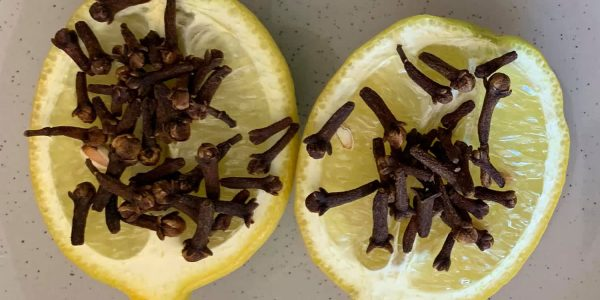 lemon-hack-flies